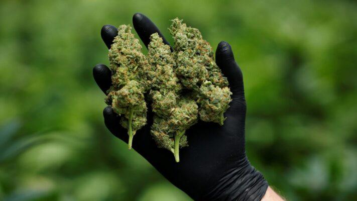 marijuana online